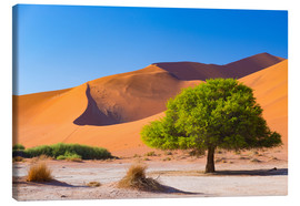 Canvas  Sand dunes and Acacia trees at Sossusvlei, Namib desert, Namibia - Fabio Lamanna