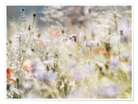 Premium poster  Summer meadow in the morning - Lichtspielart