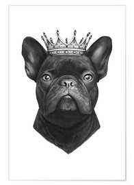 Premium poster King French bulldog