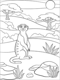 Colouring poster Curious meerkat