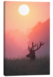 Canvas print  A male deer Stag at sunset - Alex Saberi