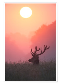 Premium poster A male deer Stag at sunset