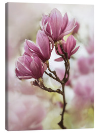 Canvas print  Branch of pink magnolia flowers - Jaroslaw Blaminsky