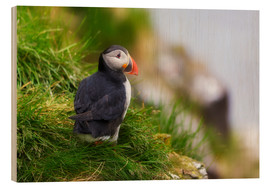 Wood print  Puffin - Moqui, Daniela Beyer