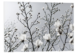 Foam board print  White Blossoms 1 - Mareike Böhmer Photography