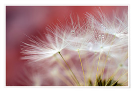 Premium poster  Dandelions magic - Ludger Föster
