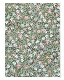 Premium poster Small pink and white flower