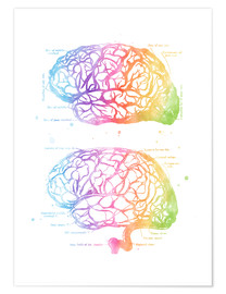 Premium poster  Rainbow brain, labeled - Mod Pop Deco