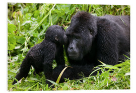 Infant mountain gorilla with mother