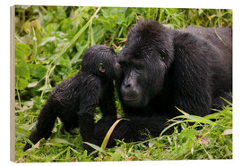 Wood print  Infant mountain gorilla with mother