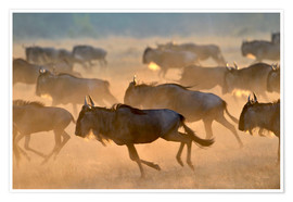 Premium poster  Wildebeests during the great migration, Serengeti - age fotostock