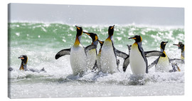 Canvas print  King penguin bathing - Cubo Images
