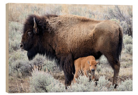 Wood print  Bison cow with calf
