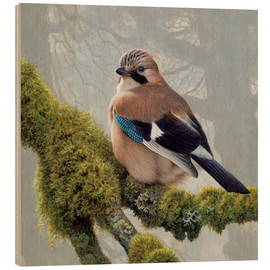 Wood print  Eurasian Jay sits on a mossy branch - Ikon Images