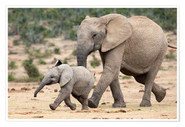 Poster  African elephant and calf