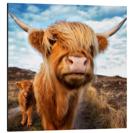 Aluminium print  Highland cattle with calf - Westend61
