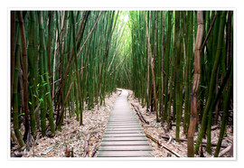 Premium poster  Trail through the bamboo forest - Pacific Stock