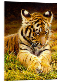 Acrylic print  Young tiger lying in grass