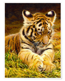 Premium poster  Young tiger lying in grass