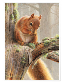 Premium poster  Squirrel crumbles on a branch