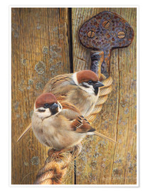 Premium poster Two fat sparrows