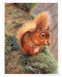 Premium poster  Squirrel with nut - Ikon Images