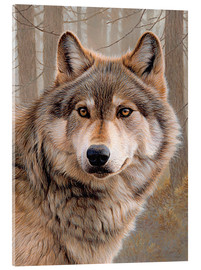 Acrylic print  North American Wolf - Ikon Images