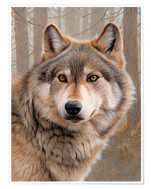 Premium poster  North American Wolf - Ikon Images