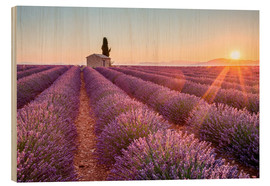 Wood print  Sunrise over lavender field - age fotostock