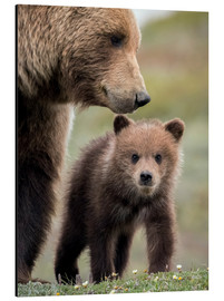 Aluminium print  Grizzly with cub - Doug Lindstrand