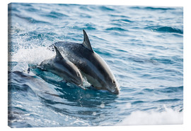 Canvas print  Eastern Pacific dolphin beside his mother - Dave Fleetham