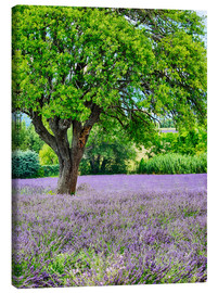 Canvas print  Lavender field in Provence - Terry Eggers