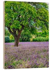 Wood print  Lavender field in Provence - Terry Eggers