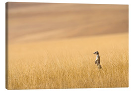 Canvas print  Meerkats in the prairie - Janet Muir