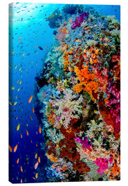Canvas print  Fish and coral reef in Indonesia - Jones & Shimlock