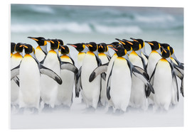Forex  King Penguins on the Falkand Islands - Martin Zwick