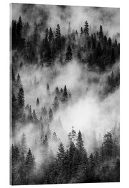 Acrylic print  Black and white pine forests - Judith Zimmerman
