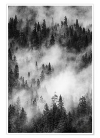 Premium poster Black and white pine forests