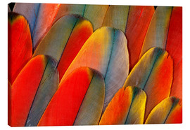 Canvas print  Plumage of a macaw - Darrell Gulin