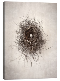 Canvas print  Bird's nest I - Debra Van Swearingen