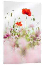 Acrylic print  Poppies in the field - Bob Daalder