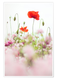 Premium poster Poppies in the field