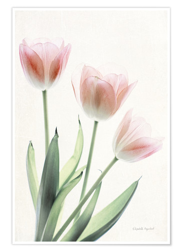 Premium poster Light and Bright Floral II