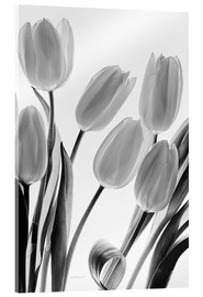 Acrylic print  Shadows and Light I - Elizabeth Urquhart