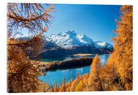 Acrylic print  Colorful forests around Lake Sils, Switzerland - Roberto Moiola