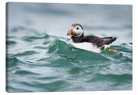 Canvas print  Puffin riding a small wave - Matthew Cattell