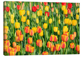 Canvas print  Blooming tulip field in the Niederladen - Roberto Moiola