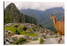 Aluminium print  Lama looks at Machu Picchu - Don Mammoser