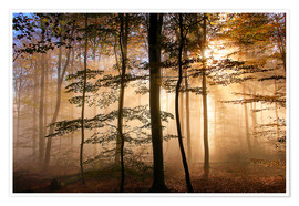 Premium poster Sunbeams In the foggy forest