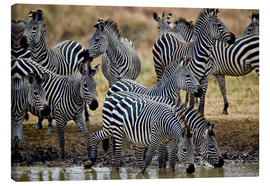 Canvas print  Zebra herd at the waterhole - James Hager